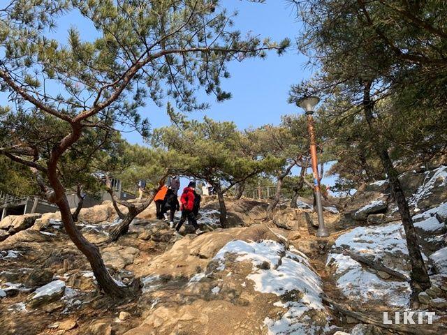바위 틈에 자리 잡은 소나무들