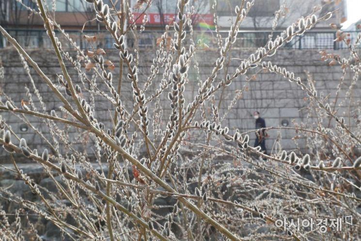 [포토]'어느새 다가온 봄'