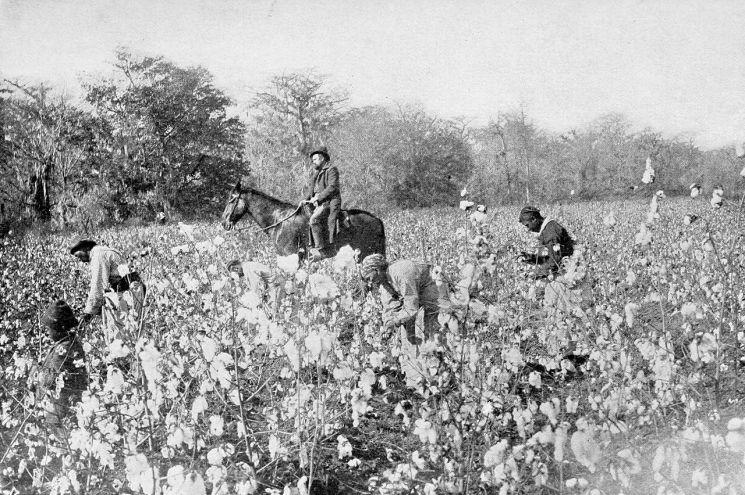 19세기 미국 남부 미시시피주 일대 면화농장의 모습[이미지출처=미국 국립기록관리청]