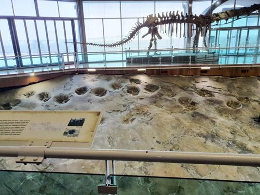 해남군 황산면 우황리에 있는 대형 초식 공룡발자국 화석 (사진=해남군 제공)