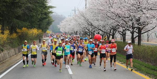 합천벚꽃마라톤대회