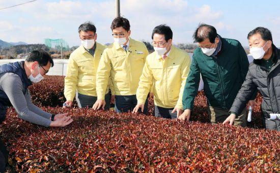김영록 전남지사, 보성 녹차 한파 피해 현장 살펴