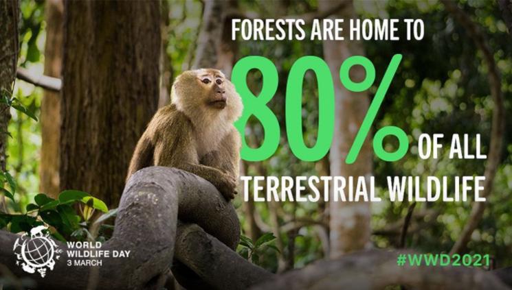 매년 3월 3일은 UN이 지정한 '야생 동식물의 날'이다. 사진=UN World Wildlife Day 인스타그램