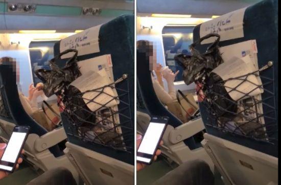 한 여성이 KTX 열차 안에서 마스크를 내린채 햄버거 등 음식물을 섭취하는 모습. 사진=온라인 커뮤니티 캡처