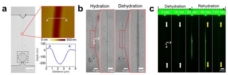 개발된 미세유체칩의 구조와 형광신호 분석 사진. 제공=울산과학기술원