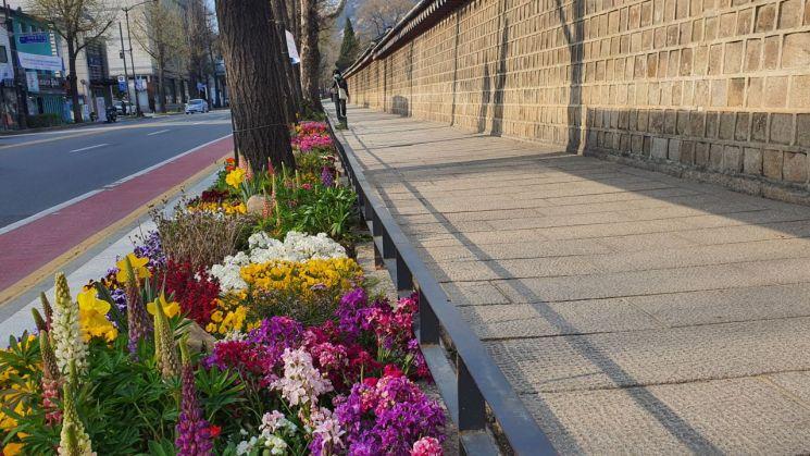 서울시, 120개 노선 '봄꽃거리'로…침체상권·선별진료소 주변에도 조성