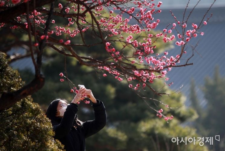 [포토] 봉은사의 봄