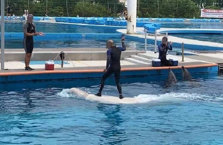 동물 학대 논란이 일었던 거제 씨월드의 돌고래 체험 프로그램. 사진=연합뉴스