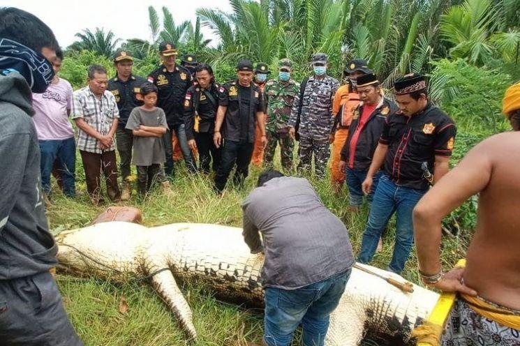 보르네오섬에서 수영하다 실종된 8세 소년이 악어 배 속에서 발견됐다. [이미지출처=연합뉴스]