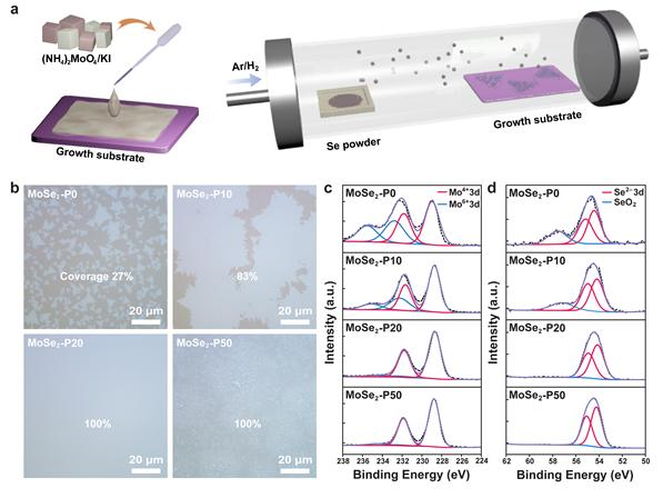화학 기상 증착(CVD) 방법을 통한 몰리브데넘 다이셀레나이드 합성. (a) 촉진제를 포함한 액상 전구체 기반 화학 기상 증착 방법 모식도. 촉진제 농도에 따른 몰리브데넘 다이셀레나이드의 (b) 광학 이미지 및 (c, d) XPS 분석. 제공=울산과학기술원