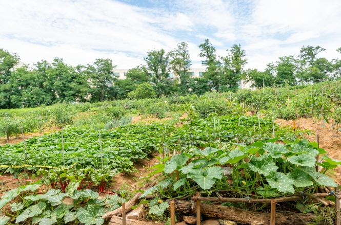 나도 도시농부 친환경 농작물 직접 키워볼까?