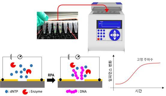 전극 분극을 감소시킨 고감도 나노갭 임피던스 센서 기반 표적 DNA 증폭 모니터링에 의한 병원체 검출 기술 개요. 그림제공=한국연구재단