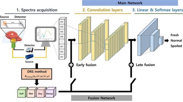 소고기 신선도 분류를 위한 심층 스펙트럼 네트워크 개략도. 신선도를 분류하기 위해 필요한 입력 데이터는 분광기로부터 측정된 스펙트럼임. 신선도와 높은 상관관계를 보이는 마이오글로빈 단백질들의 비율은 DRS를 통해 스펙트럼으로부터 산정될 수 있고, 스펙트럼과 마이오글로빈 비율의 정보를 융합하여 최종적으로 딥러닝 모델이 쇠고기의 신선도를 추론함. 그림제공-광주과학기술원