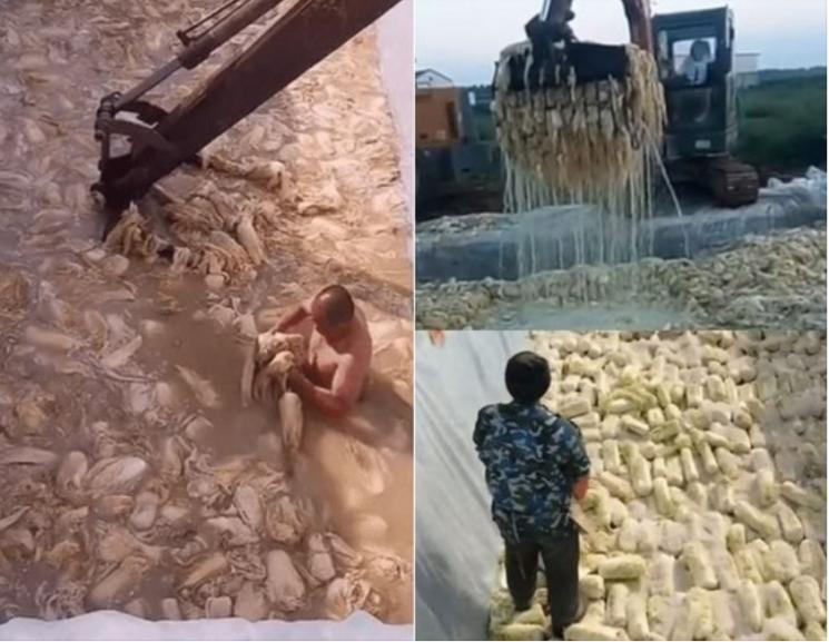 중국의 김치 공장 모습이 담긴 영상 캡처. 사진=온라인 커뮤니티