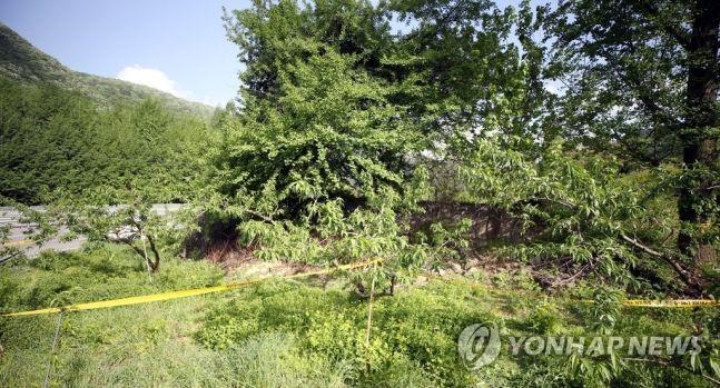 지난해 5월12일 오후 3시께 전북 완주군 상관면의 한 과수원에서 여성의 시신이 발견돼 경찰이 신원 확인하고 있다. [이미지출처=연합뉴스]