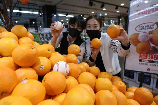 [포토] 야구공보다 큰 '자이언트 오렌지'