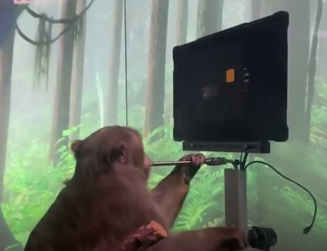 원숭이가 조이스틱을 잡고 비디오 게임을 배우고 있다. [사진=유튜브 영상 캡처]
