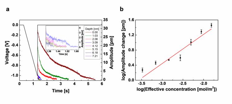 시료 깊이에 따라 가해진 삼각 직류 펄스와 펄스 종료 직후 전기화학 변위 현미경 결과. 그림제공=KAIST
