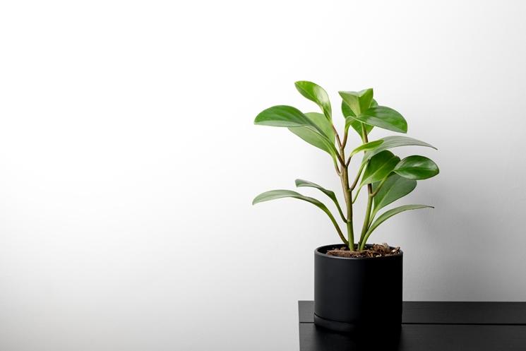 집 안에 생기 전하는 반려 식물. ⓒUnsplash