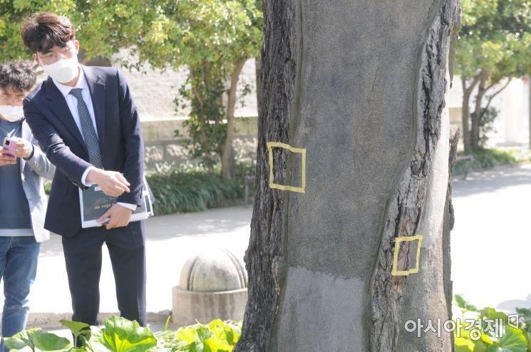 [포토] 옛 전남도청 본관 앞 은행나무에 남은 탄흔 흔적