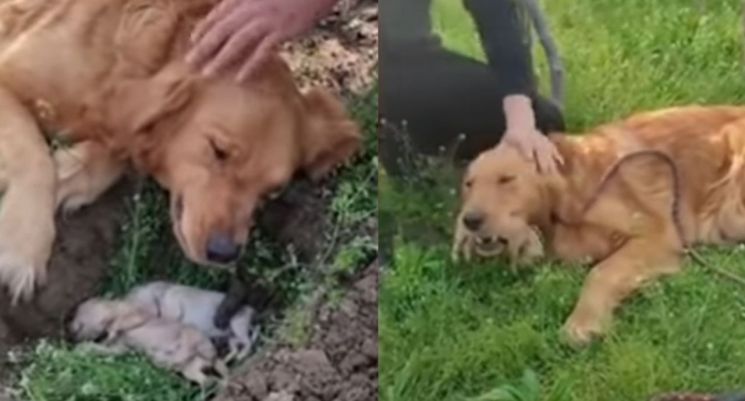16일 차이나타임스는 죽은 새끼들을 묻지 말아 달라는 듯 애원하는 어미개의 모습을 공개했다. 사진=유튜브 영상 캡처.