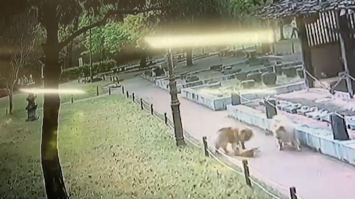 지난 13일 대구 달서구 월곡역사공원에서 차우차우 2마리가 길고양이를 공격하는 모습이 담긴 영상. [이미지출처=연합뉴스]
