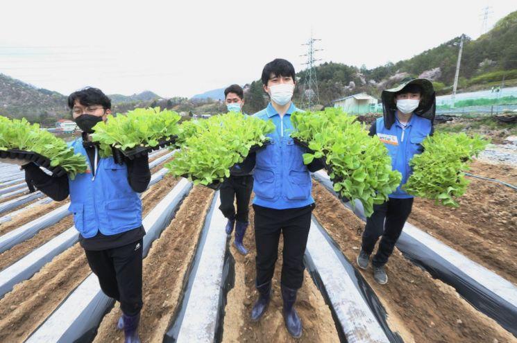 KT&G가 코로나19 여파로 인력난을 겪는 잎담배 농가를 돕기 위해 지난 16일 충북 제천지역에서 잎담배 이식 봉사를 실시했다.  KT&G 임직원들이 이식 작업을 진행하고 있는 모습이다.