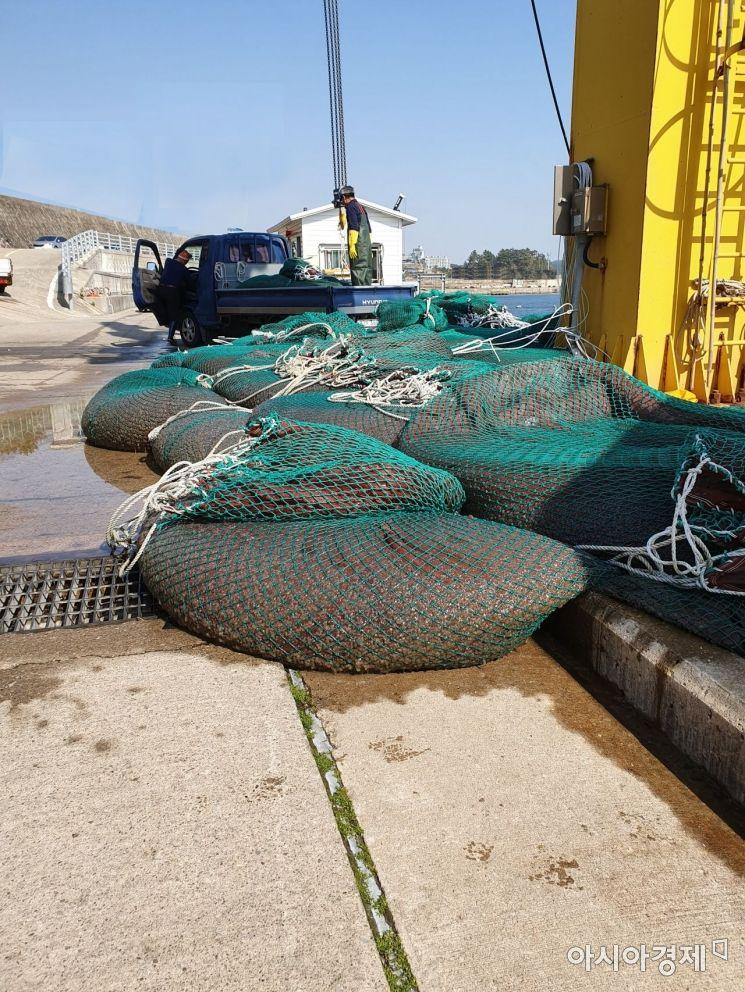 한울원전 취수구에서 수거한 400톤 가량 살파 수거 모습.