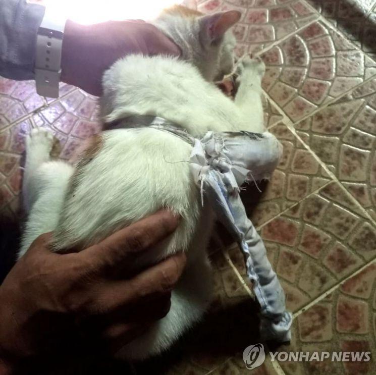 지난 16일 파나마 카리브해 연안 콜론주의 누에바 에스페란사 교도소를 들어가던 고양이 몸에 마약으로 보이는 천 주머니가 묶여 있다. [이미지출처=연합뉴스]