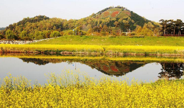 [포토] 함평천에 비친 노란 유채와 나비 동산