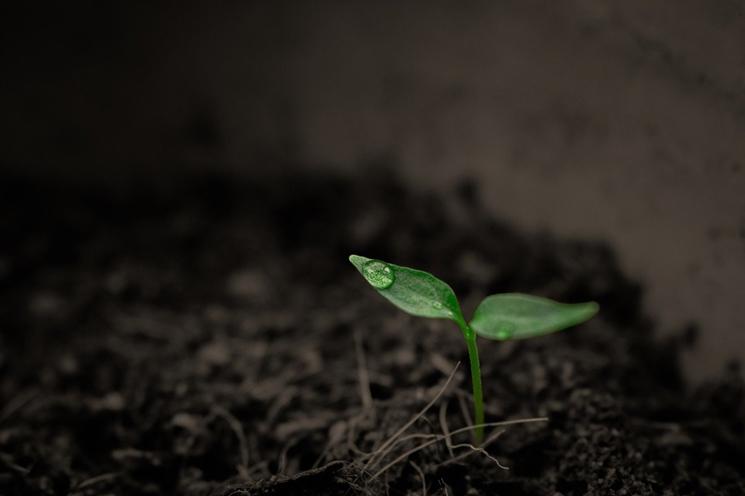 지속 가능한 의류 소재로 주목 받고 있는 식물성 섬유. ⓒPixabay