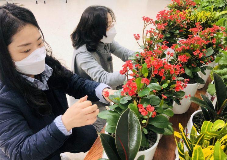 서대문구 연희동 마봄협의체 관계자들이 홀몸 어르신들에게 전할 반려식물을 손질하고 있다.