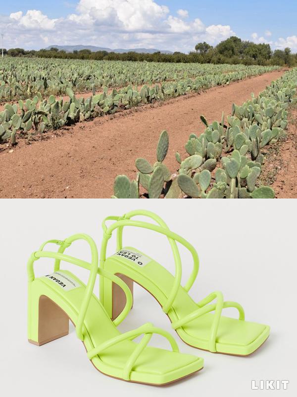 의류 소재로 사용되는 선인장 가죽. ⓒ데세르토(Desserto), H&M
