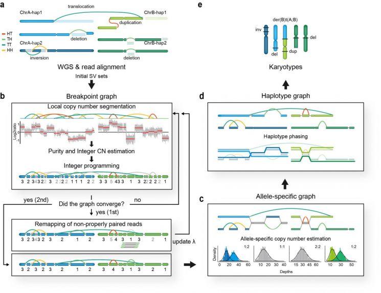 국내 연구진, 암세포 유전자 변이 확인 후 복구 성공