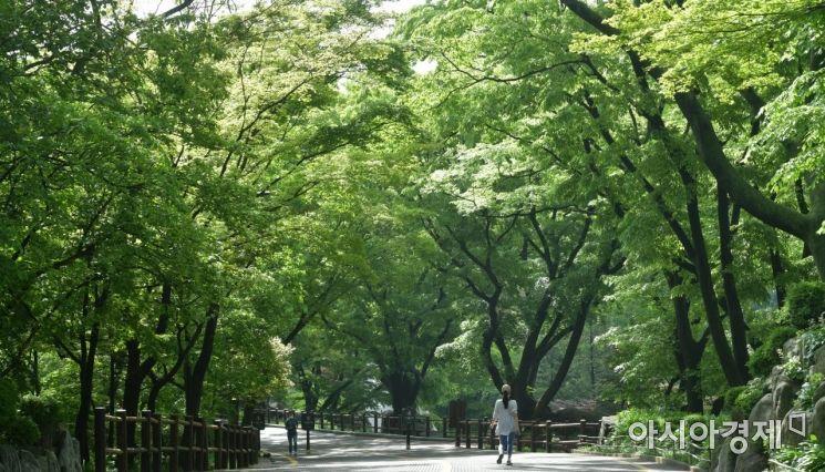 어린이날인 5일 서울 중구 남산공원을 찾은 시민들이 초록색 나무숲 사이를 거닐며 봄의 정취를 만끽하고 있다./윤동주 기자 doso7@