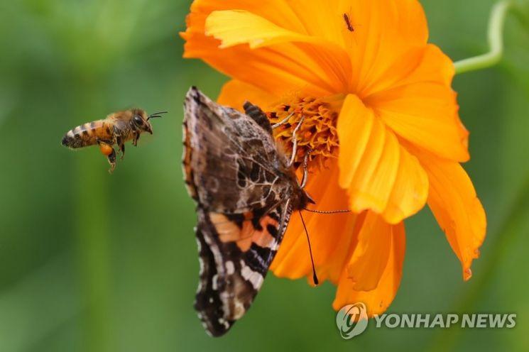 살충제는 모기뿐 아니라 벌, 나비 등 익충도 함께 죽이는 것으로 나타났다. / 사진=연합뉴스