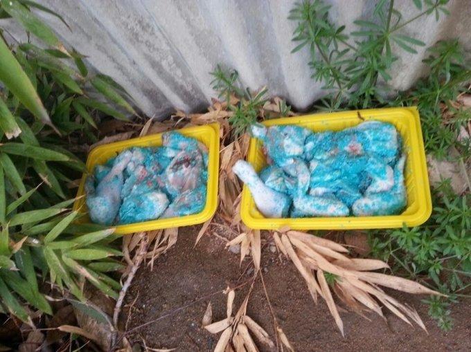 지난달 13일 대전 대덕구의 한 폐가 근처에서 발견된 쥐약이 묻은 닭고기. 사진=동물구조119 페이스북 캡처