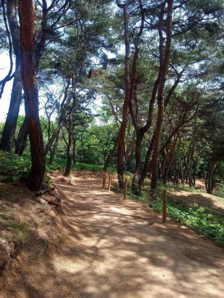 남양주 사릉 숲길