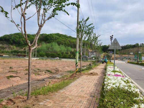 임실치즈테마파크, 진입로 중심 가로수길 새 단장