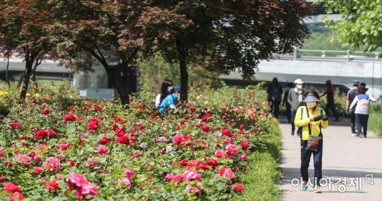 14일 서울 중랑구 중랑천 일대에서 열린 '서울장미축제'에서 코로나19 확산을 방지하기 위해 시민들이 마스크를 쓰고 장미를 구경하고 있다./강진형 기자aymsdream@