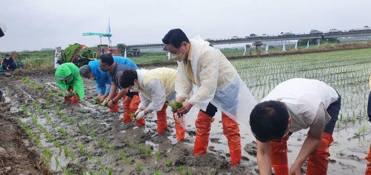 (우측 두번쨰)전동평 군수가 영암군 농민회에서 주관한 통일쌀 모내기 행사에 참여해 모내기를 하고 있다. (사진=영암군 제공)