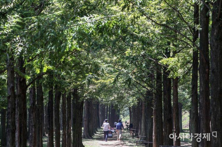 [포토]하늘공원 메타세콰이어길 찾은 시민들