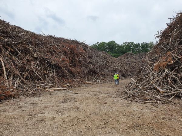 산림에 버려지는 미이용 산림바이오매스 정책 확대해야
