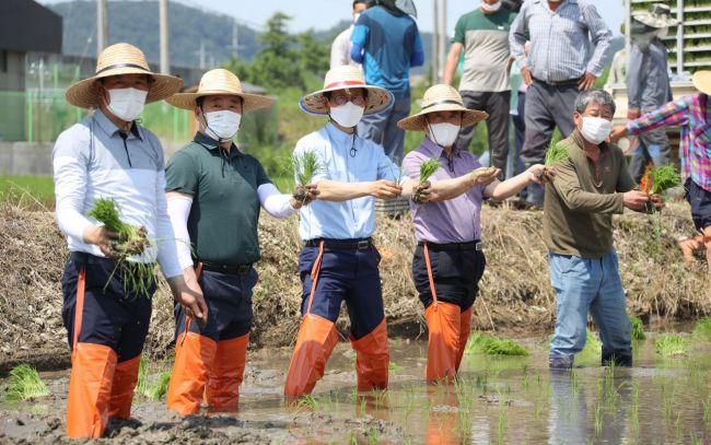유기상 고창군수, 통일쌀 모내기 행사 참여