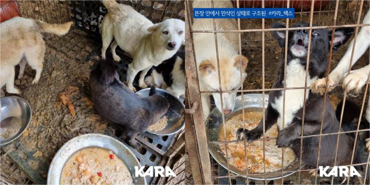 '동물권행동 카라'는 경기 남양주시의 한 개 농장에서 사육하던 개들을 지난달 27일 구조했다고 밝혔다. 사진='동물권행동 카라' 홈페이지.