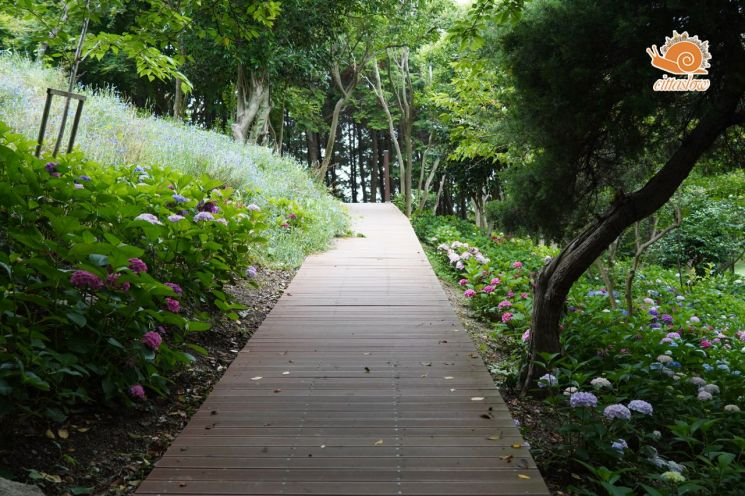 유달산 조각공원내 수국정원을 만들어 슬로시티의 지역적 환경을 조성한 목포시. 사진 = 목포시 제공