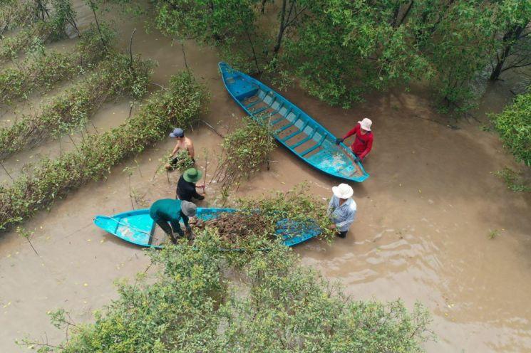 베트남 짜빈 성 인근의 '번 섬' 일대에서 현지 주민들이 맹그로브 묘목 식수 활동을 하고 있다. 사진제공=SK이노베이션
