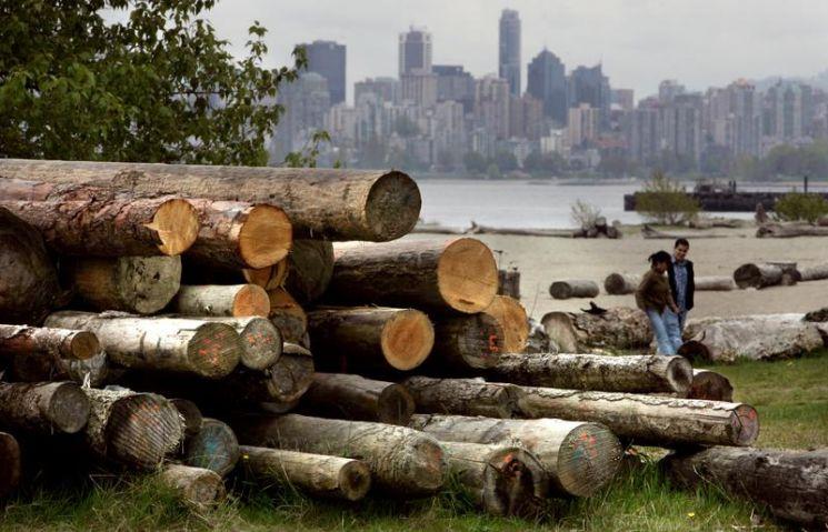 목재 가격 40% 폭락…그래도 코로나 이전의 두 배