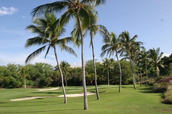 골프에서 높은 나무를 넘길 때 클리어란 말을 쓴다.
