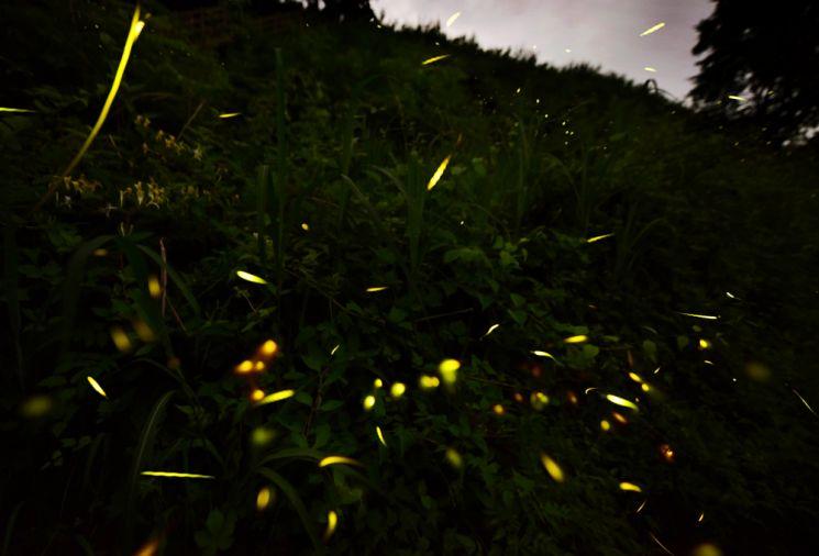 오지 중의 오지인 경북 영양 수비마을은 우리나라에서 밤하늘이 가장 맑은 곳이다. 국제밤하늘보호공원으로 지정된 '영양 반딧불이 생태공원'에는 육안으로 별을 볼 수 있고 여름밤에는 숲속에서 초록빛 유영을 즐기는 반딧불이를 만날 수 있다.